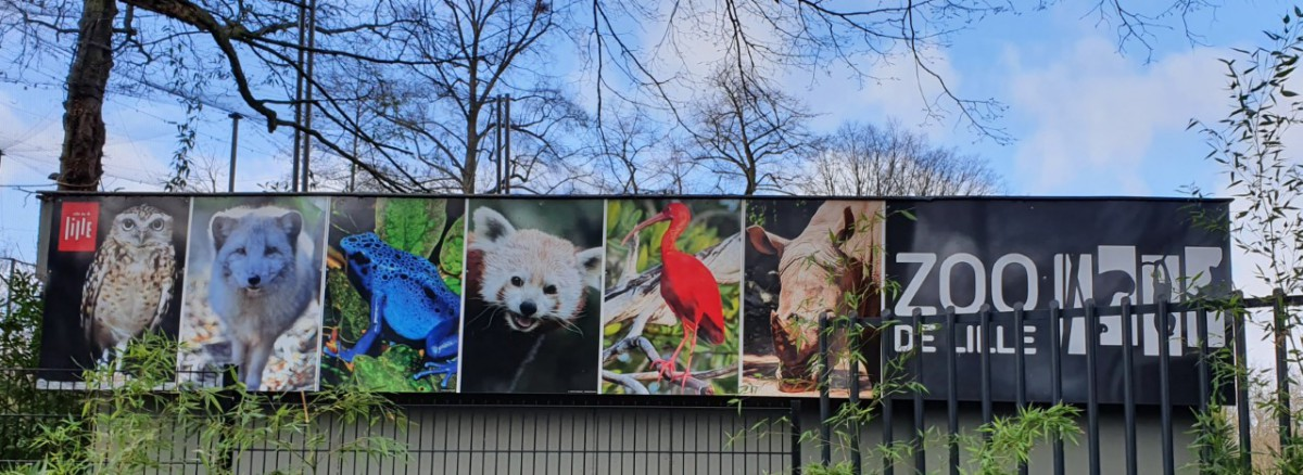 dierentuin in lille