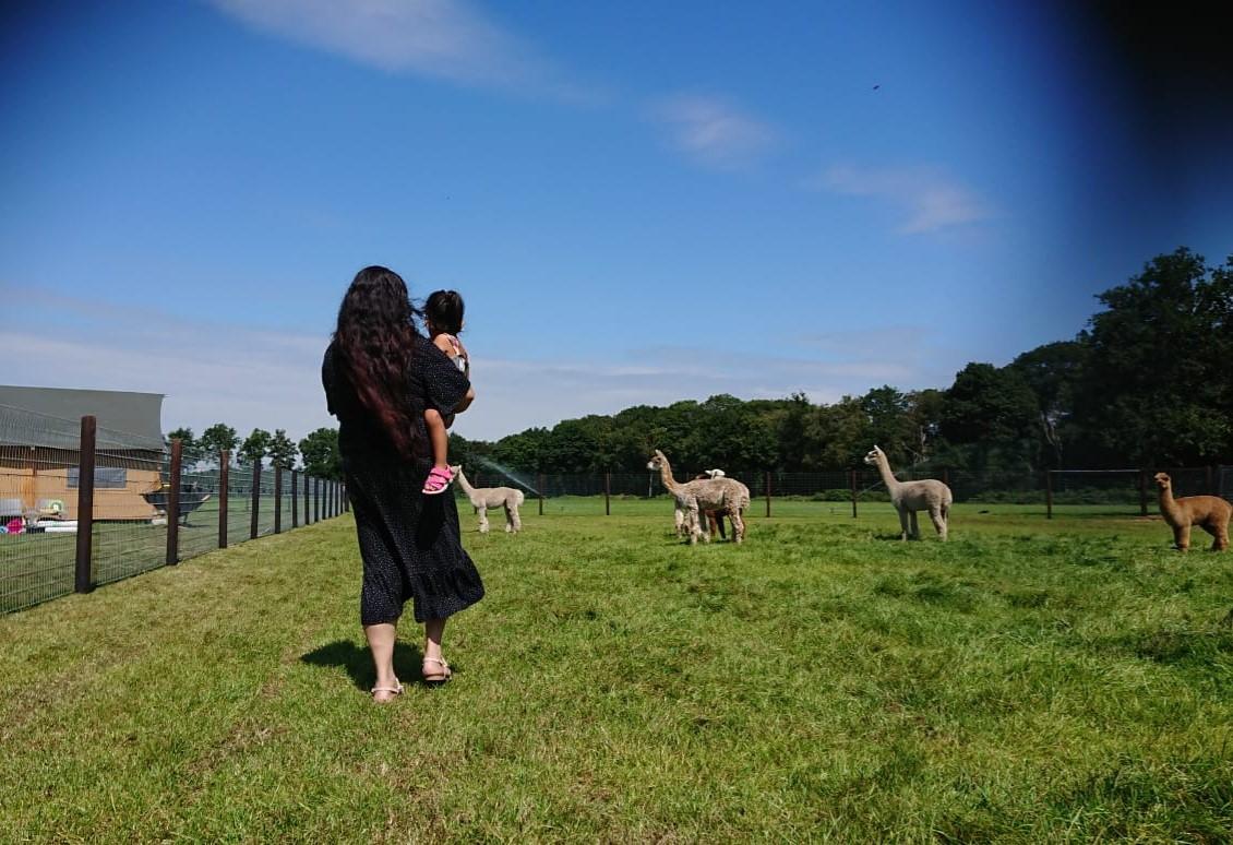 Alpaca weide in Brabant