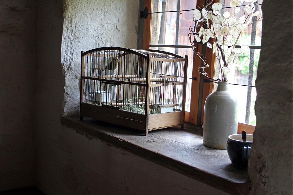 Tips voor het vinden van de geschikte vogelkooi