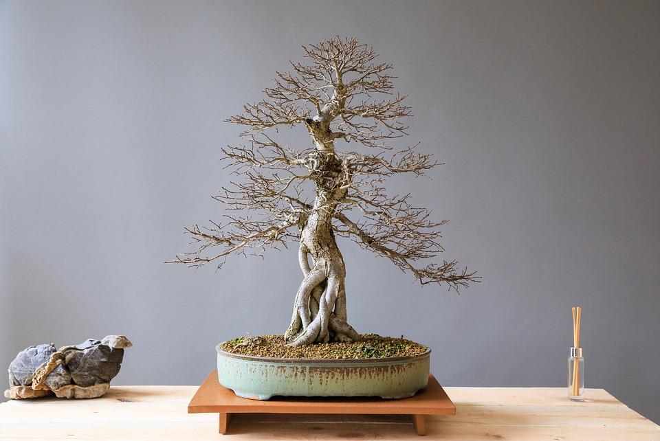 Kunstplanten kopen, helemaal van deze tijd