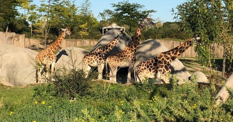 Wildlands Zoo Emmen, een dagje in de wildernis