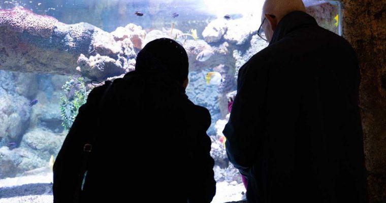 Zie ze zwemmen in Sealife Nederland